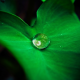 Green leaf with a drop of water cover image for the mindfulness meditation guide.