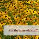 A field of Black-eyed Susans to introduce my TaraTrue blog.